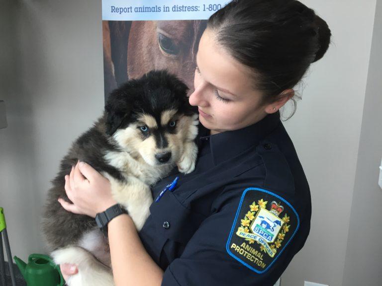 Lost & Found Animals - Alberta SPCA