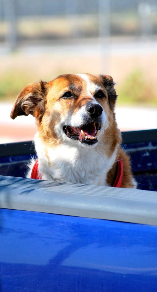 Dogs & Pickup Trucks - Alberta SPCA